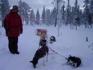 2008-akaskero-hundeschlitten-51