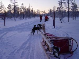 2008-akaskero-hundeschlitten-52