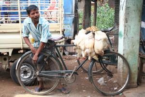 2008 India 184